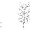 berro-guia-hierbas