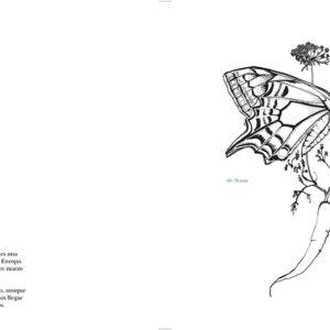 macaon-guia-mariposas