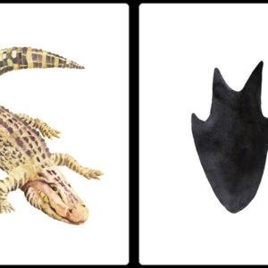 huella-de-caiman
