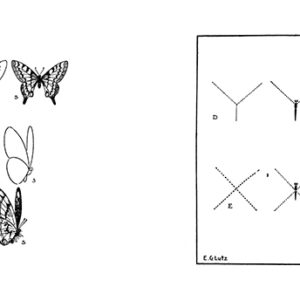 mariposas-lutz